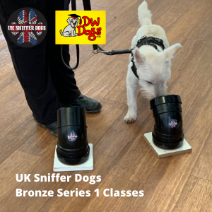 UK Sniffer Dogs Bronze 1 Sniffer Dog classes West Highland Terrier puppy sniffing