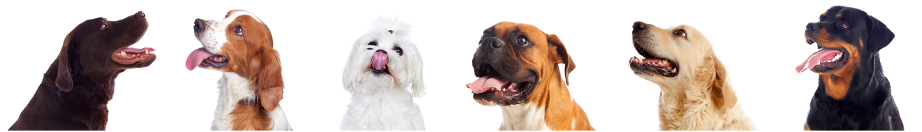 Different dog breeds - heads looking up